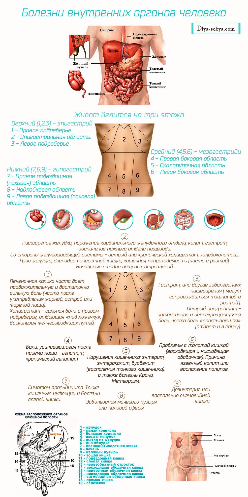 болезни внутренних органов человека, инфографика
